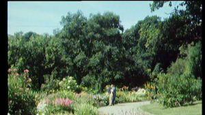Puutarharuutu
