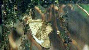 Afrikan luonnon helmiä