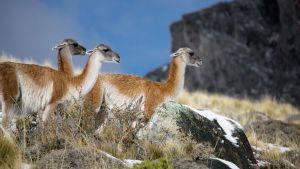 Avara luonto: Villi Patagonia