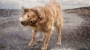 Prisma: Koirien salainen elämä
