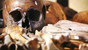 Muinaisgenomitutkimus kertoo mistä kansoista nykysuomalaiset on sekoitettu