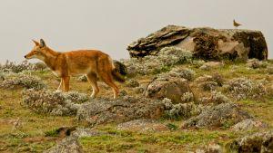 Avara luonto: Afrikan kadonneet sudet