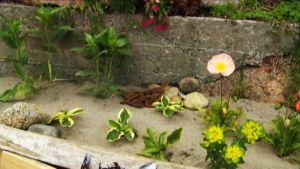 Iloa puutarhasta