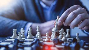Peliteoria on päätöksenteon tiedettä, jota sovelletaan niin biologiassa kuin ydinasestrategioissa