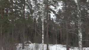 Luonto lähellä