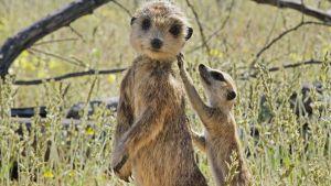 Avara luonto: Eläimet piilokamerassa