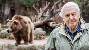 Luontohetki: Attenborough'n erikoiset