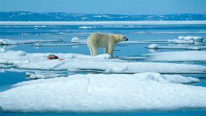 Prisma: Totuus ilmastonmuutoksesta