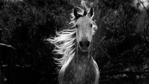 Prisma: Hevosen tarina