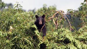 Avara luonto: Amerikan kansallispuistot