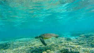 Luontohetki: Monimuotoinen Australia