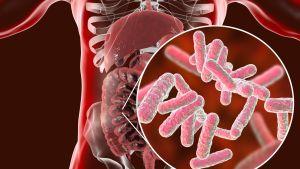 Suolistomikrobit muokkaavat meitä (ja me niitä) - ne voivat tehdä meistä maratoonareita ja vaikuttaa aivojemme toimintaan