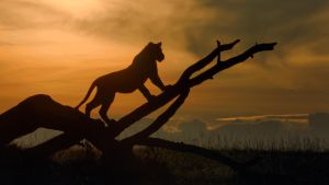 Avara luonto: Eläinmaailman dynastiat