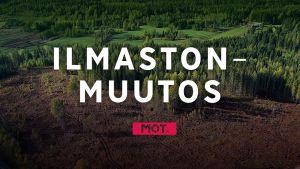 Metsähakkuita miljardilaskun uhalla