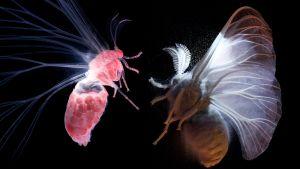 Yöperhosten salattu maailma
