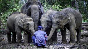 Mummojen mysteeri -  miksi ihmiset, miekkavalaat ja norsut elävät niin pitkään?