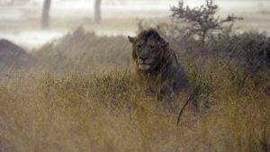 Avara luonto: Serengeti