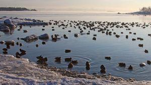 Juha Laaksosen luontoretki