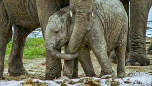 Luontohetki: Tansanian kansallispuistot
