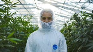 Prisma: Kannabis - lääke vai huume?