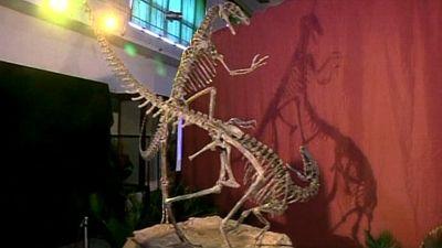Arkosaurit Ylefi