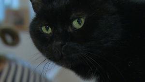Musta kissa istuskelee,