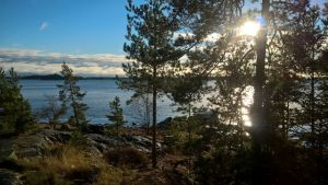 Solen lyser genom en tall med blått vatten i bakgrunden och berg i förgrunden.