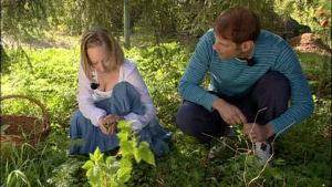 Alexandra plockar ogräs till sallad.
