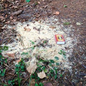 Vilken grävare har strött träflisor på stigen? undrar Solveig