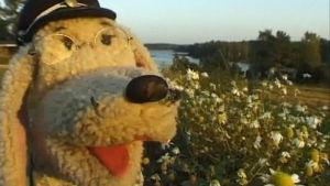 Eno-Elmeri kukkaniityllä. Takana näkyy järvi.