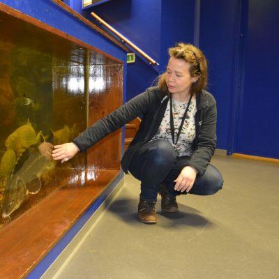 Maretariumin toimitusjohtaja Sari Saukkonen katsoo akvaariossa olevia kaloja.