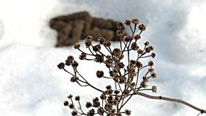 Hundbajs på snö