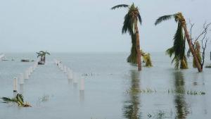 Palmer står i vatten på översvämmad strand på Bahamas.
