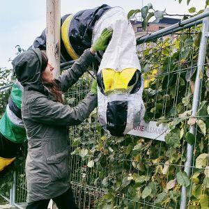 """Taiteilija Johanna Lonka asettelemassa """"Maan muokkaaja"""" -teosta raitiotietyömaan aitaan Tampereen rautatieasemalla."""