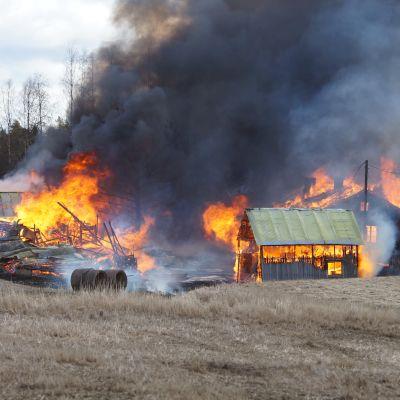 Omakotitalo ja kaksi piharakennusta tulessa Koskella.
