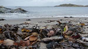 Snäckor och höstlöv på sandstrand på Sydkoster