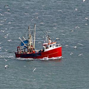 En röd trålare ut på havet, måsar flyger omkring båten.