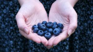 Två kupade händer med blåbär