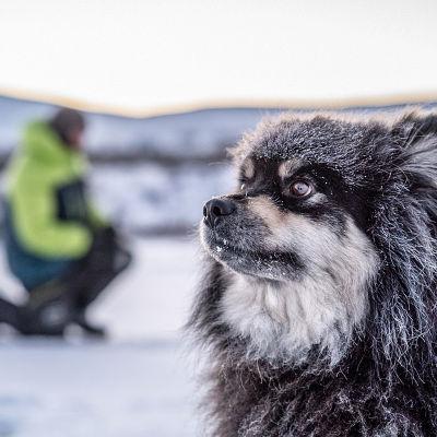 Äijä-koira isäntänsä Aki Huhtasen kanssa Käsivarren erämaassa.