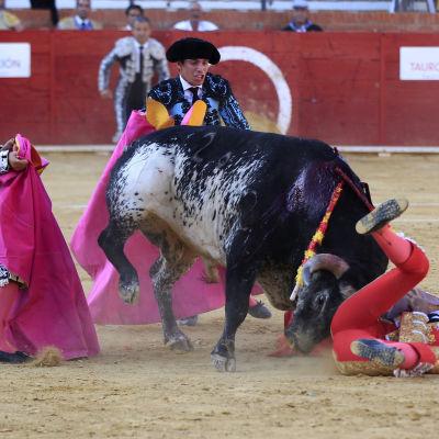 Tjurfäktaren Víctor Barrio stångas ihjäl på arenan i Teruel,