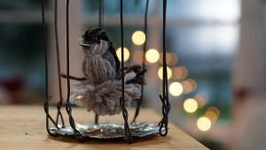 En garnfågel i en bur.