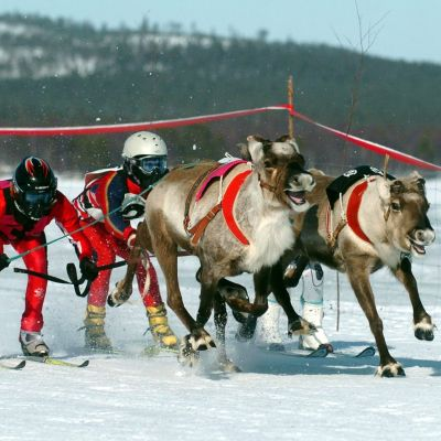 Tävling i Enare i Lappland i april 2005