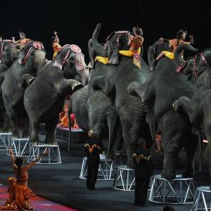 Norsuja Ringling Bros. and Barnum & Bailey -sirkuksen esityksessä Yhdysvalloissa vuonna 2009.