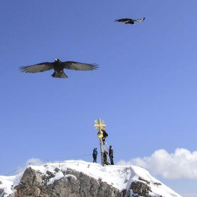 Sepät korjaavat Zugspitzen ristiä joka vauroitui myrskyssä 6. maaliskuuta 2019. Zugspitze on Saksan korkein vuori (2962 metriä merenpinnan korkeudelta).