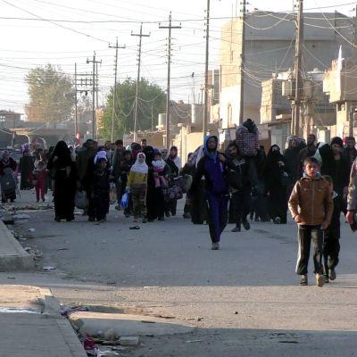 IS använder tiotusentals civila som mänskliga sköldar i Mosul enligt FN. Dessa civila är på väg till ett flyktingläger från de södra utkanterna av Mosul som har intagits av regeringsstyrkor