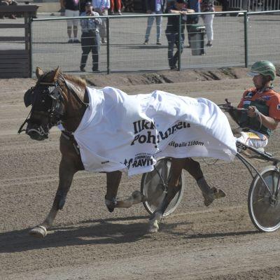 Hetviina voitti Kuningatarkilpailun avausmatkan Kuninkuusraveissa Seinäjoella lauantaina 1.8.
