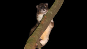 En ny art av träddasse på en gren.