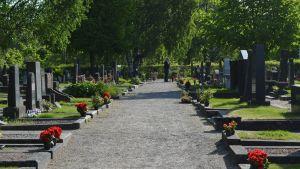 Blommor är utradade på gravarna på Vasa gravgård. Till näst ska de planteras.