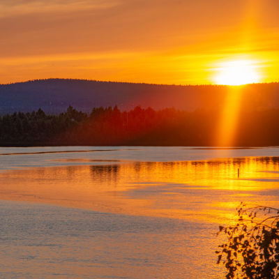 Sup-lautailijoita melomassa Ounasjoella keskiyön auringon loisteessa.