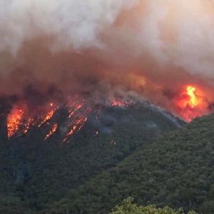 Elden härjar i East Gippsland i den australiska delstaten Victoria.